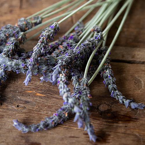 English Lavender Flower