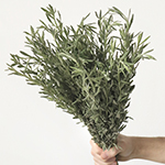 lavender flower greenery sold in wholesale bunches