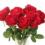 Enticing Red Garden Wholesale Roses In a vase