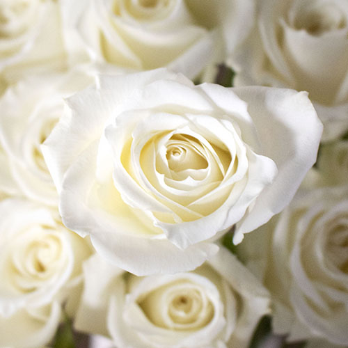 White rose DIY wedding flowers