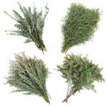 Eucalyptus DIY Wholesale Flower FlatLay