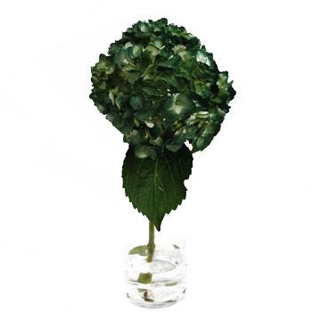 Evergreen Airbrushed Hydrangea Stem View