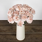 Faith Pink Carnation Flowers In a vase