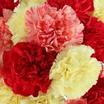 Fall Farm Mix Wholesale Carnations Up close