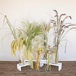 Fall Ornamental Grass DIY Flower Kit Bunch