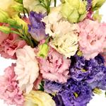 Farm Choioce Frill Lisianthus Wholesale Flower Upclose