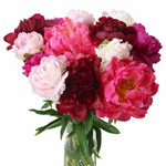 Farm Mix Color Peony in a vase