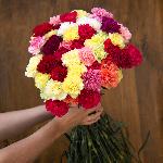Farm Mix Carnations side stem