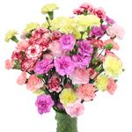 Farm Mix Mini Carnation Flowers In a vase