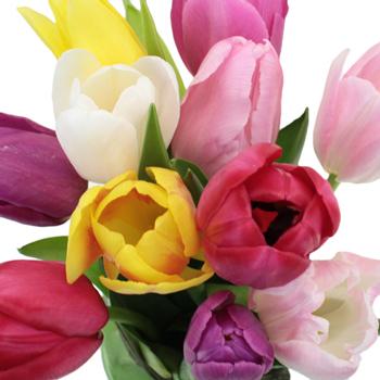 Farm Mix Standard Tulip Wholesale Flowers Up Close