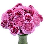 Fierce Pink Carnation Flowers In a vase