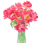 Flashpoint Pink Peony Tulip Wholesale Flower In a vase