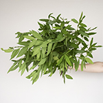 Fresh cut greens fall bay leaf filler flowers sold near me for delivery