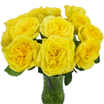 The yellow pompom garden rose is sold in fresh cut bulk bunches