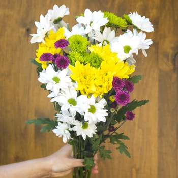 Save the Classic Daisy, Poms and Cushion Mix