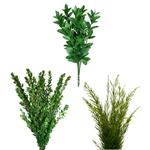 Fresh Greens DIY Flower Kit Flatlay