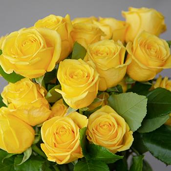 Bright Sun Yellow Fresh Cut Roses