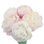 Gardenia Wedding Peony for sale