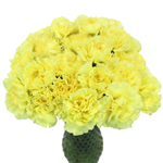 Giole Yellow Carnation Flowers In a vase