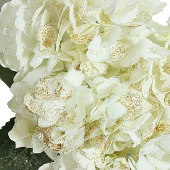 Gold Flecked White Hydrangea Wholesale Flower Up close