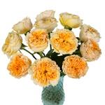 Golden Apricot Garden Wholesale Roses In a vase