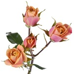 Golden Peach Petite Rose Stem