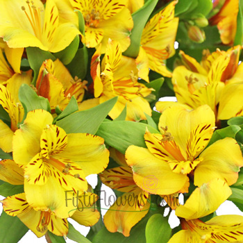 Golden Yellow alstroemeria Wholesale Flower Upclose