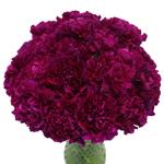 Golem Fuchsia Purple Carnation Flowers In a vase