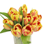 Grand Perfection Yellow and Red Tulip Wholesale Flower In a vase