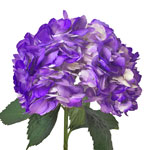 Grape Purple Airbrushed Hydrangea Flower Stem View