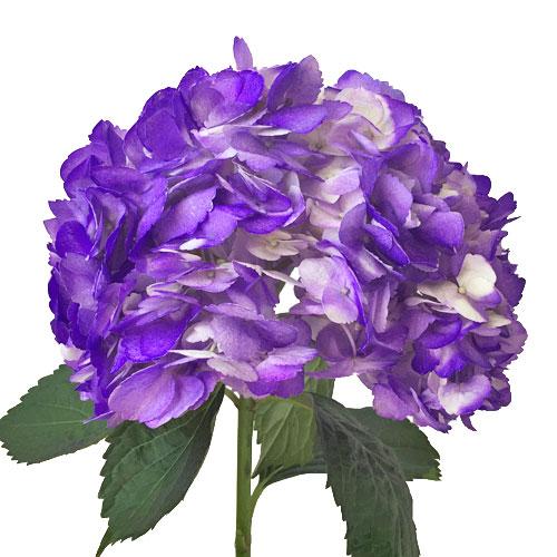 Grape Purple Airbrushed Hydrangea Flower Stem View