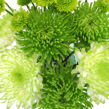 Pea Pod DIY Wedding Flower Pack
