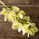 Green cymbidium orchid bulk wedding flowers