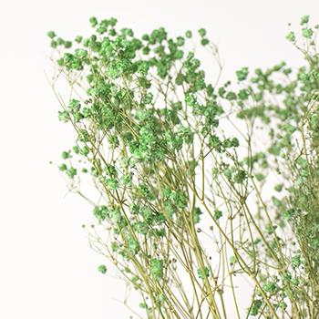Secret Forest Green Dried Gypsophila
