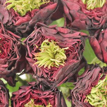 Green Eyes Merlot Garden Roses up close