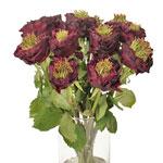 Green Eyed Merlot Garden Wholesale Roses In a vase