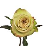 Green Fashion Rose Stem