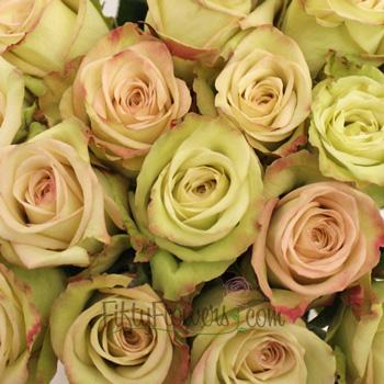 Green Fashion Roses Up Close