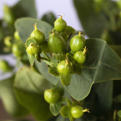 Green hypericum berry DIY wedding flowers