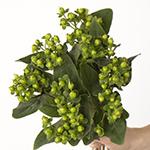Green hypericum berry wholesale wedding flowers