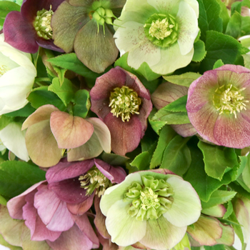 Farm Mix Hellebore Wedding Flowers