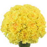 Hermes Yellow Carnation Flowers In a vase