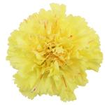 Hermes Yellow Carnation Flower Bloom