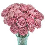 Homer Magenta Carnation Flowers In a vase