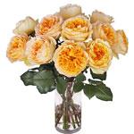 Honeybee David Austin Garden Wholesale Roses In a vase