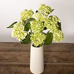 Honeydew Green Hydrangea Wholesale Flower In a vase