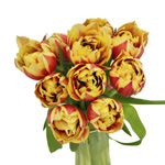 Horizon Yellow and Red Double Tulip Wholesale Flower In a vase