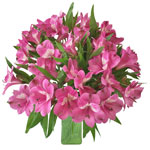 Hot Pink Peruvian Lily Flower in a Vase
