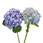 Hues of Lavender Hydrangea 2 Stems View
