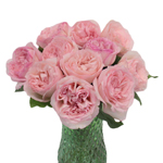Hues of Pink Garden Wholesale Roses In a vase